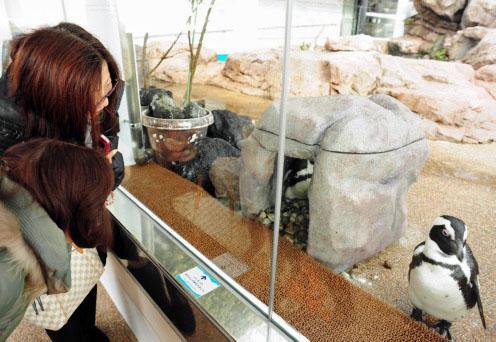 ペンギンの子育てが間近で見られる展示ゾーン
