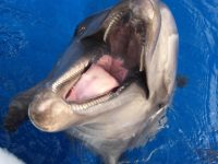 ハンドウイルカの「ビート」