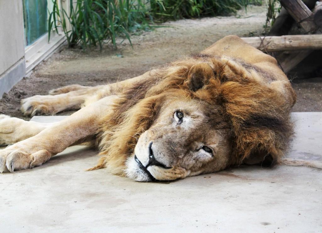 地球上で最も長生きする10の動物:らばQ